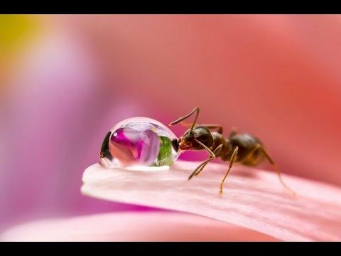 قصص أطفال قصيرة .. قصة النملة التى غرقت فى قطرة عسل