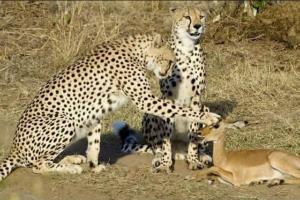 عجائب وغرائب الحيوانات معلومات وحقائق مدهشة عن عالم الحيوان