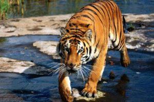 هل تعلم عن الحيوانات بعض المعلومات الغريبة والنادرة عن الحيوانات