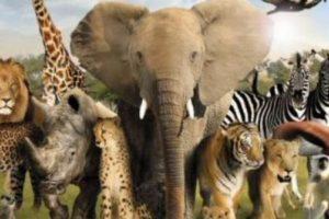 معلومات عن الحيوانات المفترسة والأليفة أغرب 10 معلومات عن الحيوانات ستدهشك