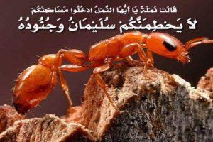 قصص القرآن للأطفال قصة النملة مع نبي الله سليمان عليه السلام