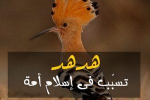 قصص من القران الكريم قصة هدهد سليمان عليه السلام