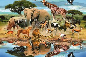 معلومات هل تعلم عن الحيوانات شيقة وممتعة تعرفها لاول مرة