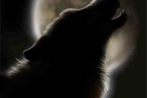 هل تعلم عن الحيوانات المفترسة هل تعلم ما هو الحيوان الوحيد الذي يخشاه الجن