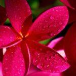 ورد تعرف علي اجمل الزهور والورود في العالم واسمائها ازهار التوليب والورد الجوري
