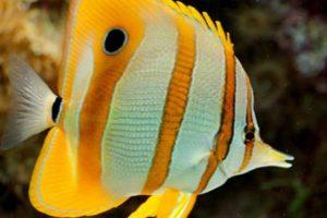 عالم الحيوان عجائب وغرائب مدهشة معلومات غريبة عن الحيوانات تعرفها لأول مرة