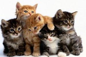 قطط معلومات مفيدة عن تربية القطط وكيفية العناية بها وانواع القطط