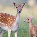 حيوانات معلومات غريبة ومدهشة عن عالم الحيوان تعرفها لأول مرة