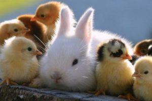 حيوانات معلومات رائعة وغريبة جداً عن عالم الحيوان وبحث شامل عن الحيوانات في العالم