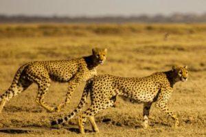 الحيوانات البرية معلومات شيقة عن الحيوانات البرية وانواعها من المفترس والأليف