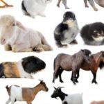 اصوات الحيوانات والطيور واستخدامها علي مر التاريخ للاستفادة منها