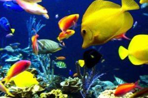 انواع السمك اسماك الزينة واشهر الاسماك المفترسة والاسماك الصالحة للأكل