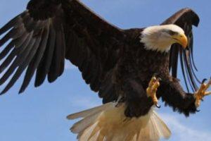 انواع الطيور واسمائها ومعلومات مفيدة تعرفها لأول مرة عن كل نوع من الطيور