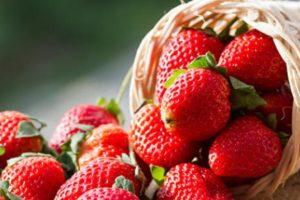 فوائد الفراولة للجسم ودورها الوقائي والعلاجي في السرطان وامراض القلب