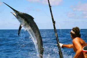 صيد السمك خطوات تعلم الصيد وطرق الصيد بالطعم ومصيدة السمك والتفجير