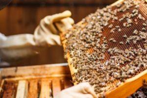 تربية النحل تعرف علي كيفية عمل خلية نحل وادواتها لإنتاج العسل