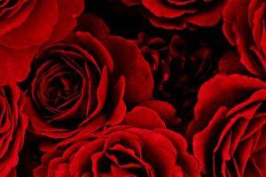 عبارات عن الحب اجمل الخواطر الرومانسية التي تصف مشاعر العشق والهيام