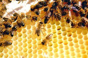 خلية النحل معلومات رائعة تعرفها لأول مرة عن النحل ووظائفه في الخلية