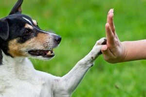 تدريب الكلاب متي يبدأ ؟ وكيف يتم الاعتناء بالجرو الصغير واطعامه ورعايته الصحية ؟