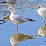 طيور معلومات رائعة تعرفها لأول مرة عن مجموعة من الطيور المنتشرة حول العالم