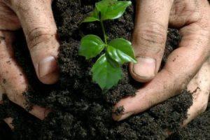 الزراعة معلومات حول اهمية الزراعة والمشاكل التي تواجهها وتطورها