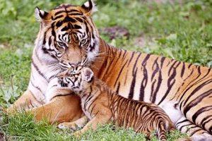 التكاثر عند الحيوانات وعجائب وغرائب مدهشة في عالم الحيوان