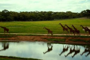 حديقة الحيوانات في دبي معلومات مشوقة عن تأسيسها وموقعها ومواعيد الزيارة بها