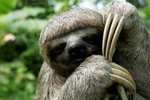 الحيوانات الاليفة معلومات مثيرة تعرفها لأول مرة عن حيوان الكسلان وغيره من الحيوانات