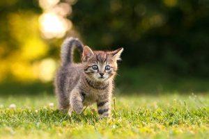 الحيوانات الأليفة معلومات رائعة ومفيدة عن القطط لعشاق تربية القطط