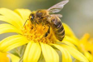 النحل معلومات مشوقة ومثيرة عن حياة النحل وانتاج العسل