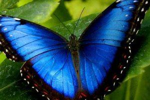 دورة حياة الفراشة مكتوبة بشكل مبسط وسهل لجميع الاعمار