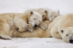 معلومات غريبة ومثيرة عن نوم الحيوانات بقلم : د.السيد نجم