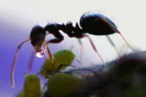 معلومات علمية غريبة ومفيدة عن النمل تعرف عليها الآن