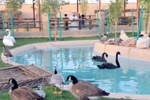 حديقة حيوانات دبي ومعلومات عن المعالم السياحية التي اشتهرت بها