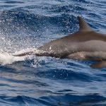 دلفين معلومات مثيرة تعرفها لأول مرة عن لغة الدلافين وحياتها
