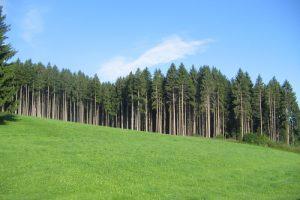 السد الأخضر وتاثيراته على المناخ والتربة