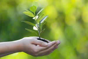 هل تعلم عن النباتات بالصور