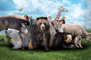 اسئلة معلومات عامة واجوبتها عن الحيوانات