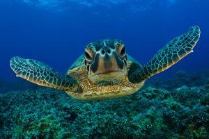 هل تعلم عن الحيوانات البحرية عجائب وغرائب بالصور