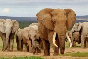 هل تعلم معلومات عامة قصيرة عن الحيوانات