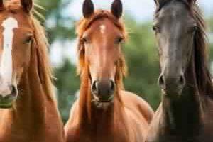 انواع الخيول ومعلومات مشوقة تعرفونها لأول مرة عنها