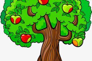 فوائد الشجرة المتعددة ومما تتكون الأشجار