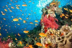 معلومات عامه عن الشعاب المرجانية حقائق مذهلة ومثيرة
