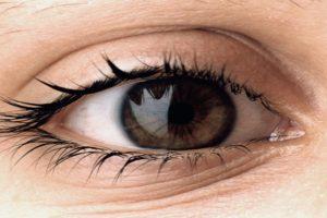 بحث عن العين ومكوناتها المختلفة
