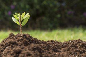 تأثير الانسان علي التربة وواجبه نحوها
