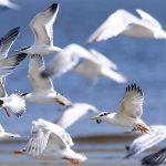 معلومات ثقافية مفيدة عن الطيور وانواع ريشها بقلم الدكتور السيد نجم
