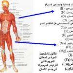 معلومات طبيه غريبه ومفيده عن جسم الانسان واعضاءه المختلفة