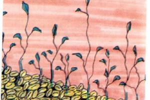 قصص الشعوب حكايات عالمية مسلية وطريفة قصة أم البركات