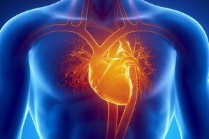 قلب الانسان من آيات الرحمن في الجسم معلومات علمية رائعة بقلم : د. محمد مصطفي السمري