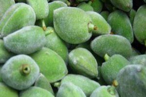 فوائد اللوز الأخضر للبشرة والشعر والصحة العامة
